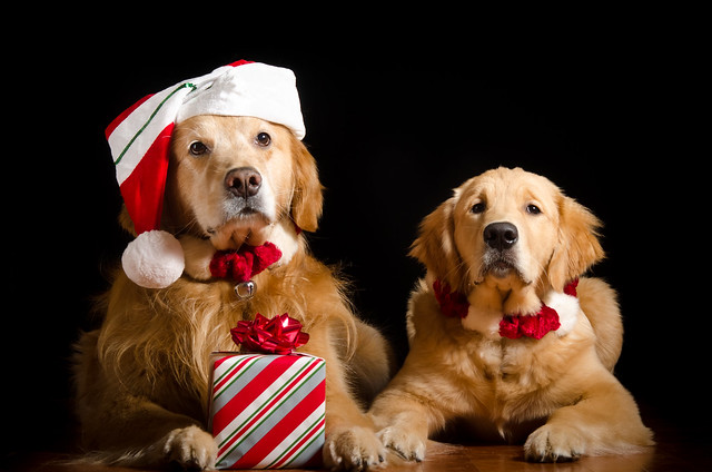 Santa Dog and Helper 49/52