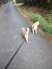 IMG_20180916_083017 - Photo of Montner