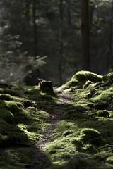Sun lit forest path