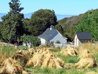 Harvest, Oak Glen, CA 9-07