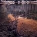 summer at Harris Lake in infrared 10