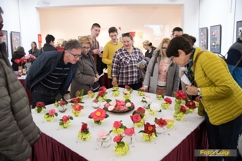Foto Luigi Opatija, Grad Opatija, TZ grada Opatije, HRMT, Hrvatski muzej turizma Opatija, Izložba kamelija 2018
