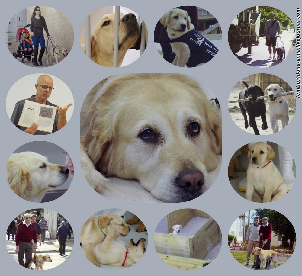 Dogs-collage-a
