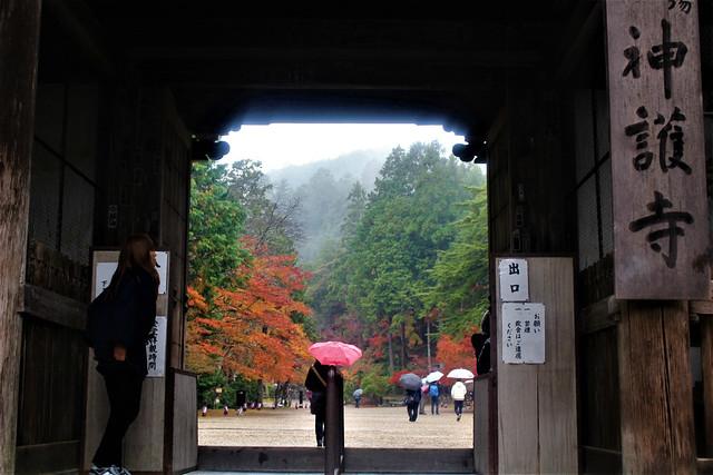 jingoji-koyo001