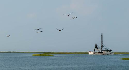 Gulf Shore Landscape