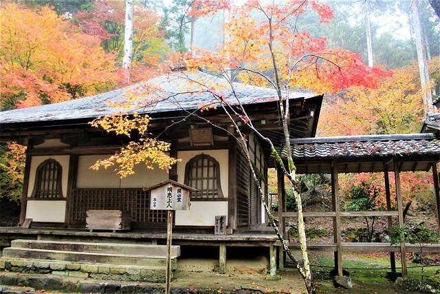 kosanji-koyo016