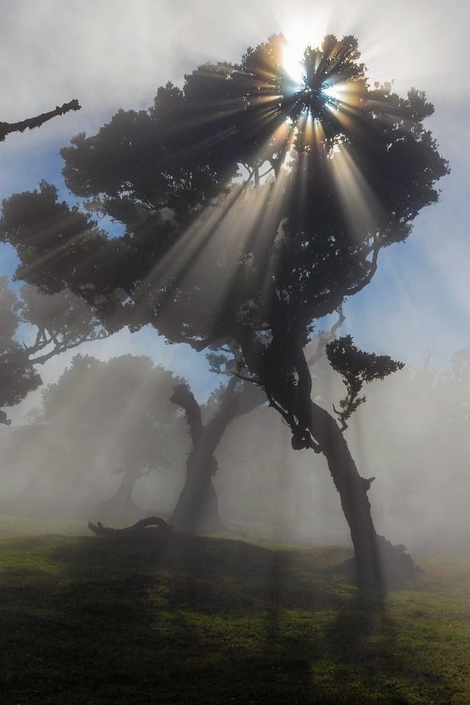 Sun & Mist & Silhouette