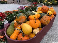 Visit to pumpkin patch