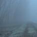 Fog. by GiannLui