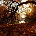 Fall in Timișoara