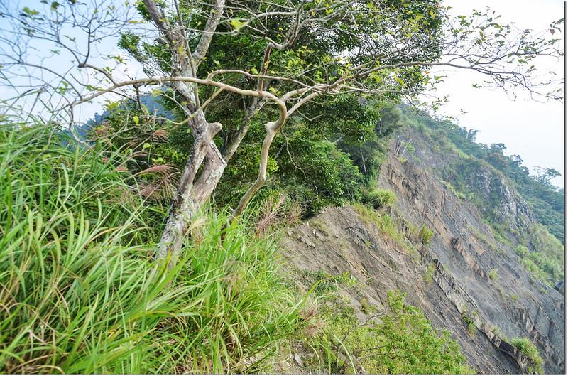 小林山登山步道大坍方危瘦稜地形 1