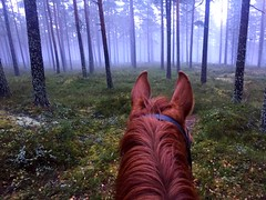 """Image by please follow me on insta """"windsofgreen"""" (smulgubbe) and image name The red mare in the woods. My soul messenger. photo"""