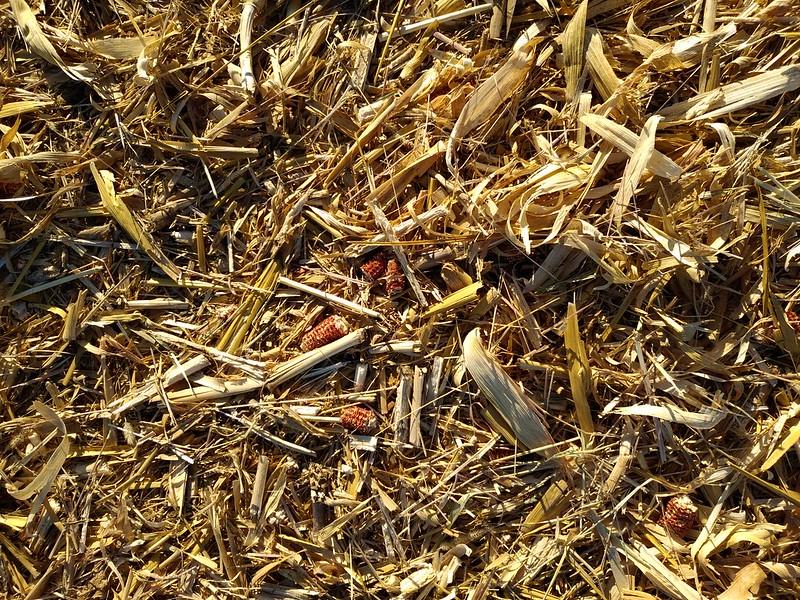 Ground texture #13