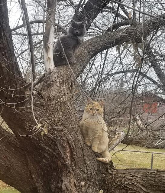 20181027.tree.kits