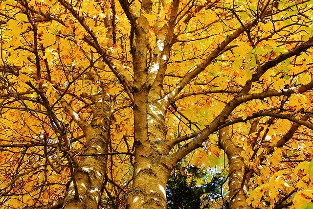 10 13 2013 Ee Yellow Splendor [Explored], Canon EOS REBEL T2I, Canon EF-S 18-55mm f/3.5-5.6 IS II