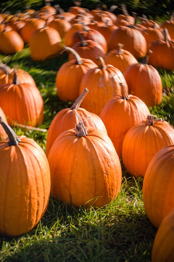 Pumpkin sales near Vejle, Denmark