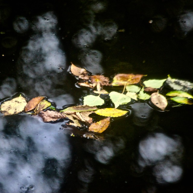 L'arrivée de l'automne au marais...!!!