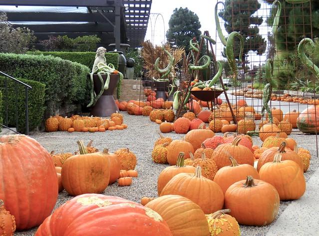 Crazy Gourds and Pumpkins