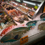 20180612-073657.jpg Pretty Fish