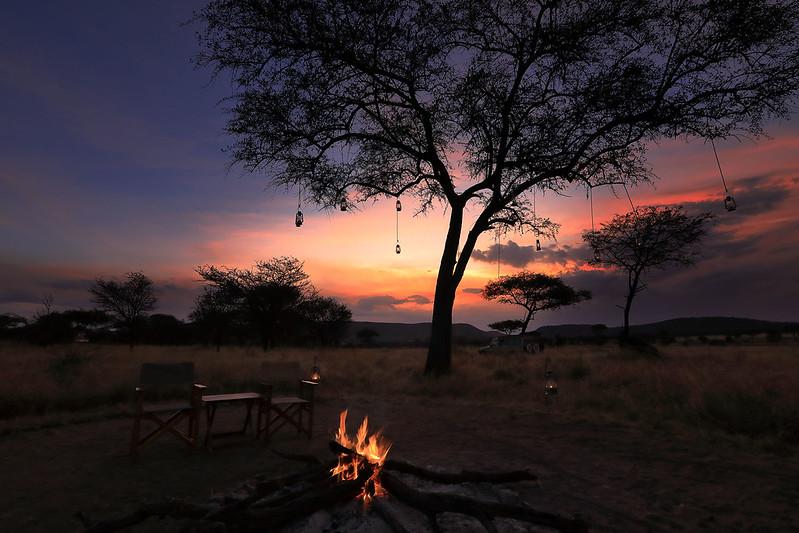 Evening in the Serengeti