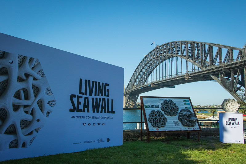 Living Seawalls Launch at Milson's Point