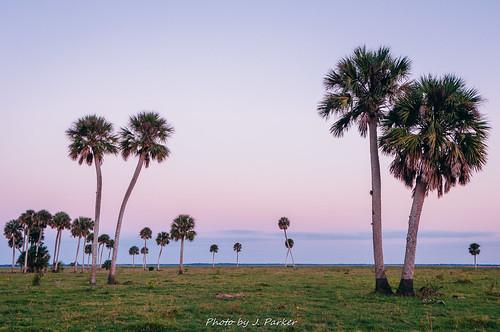 Palm Trees and a Purple Sky (series II)