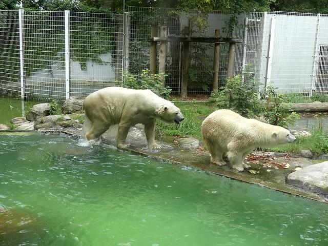 Eisbär Vitus und Larissa, Tierpark Neumünster
