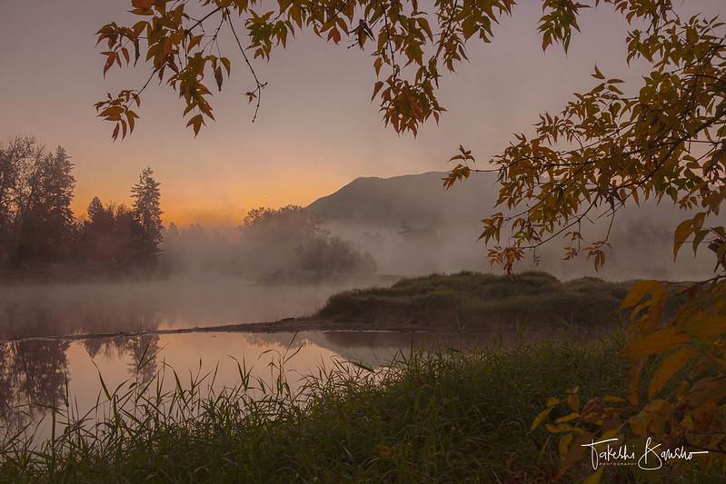Autumn leaves in dawn
