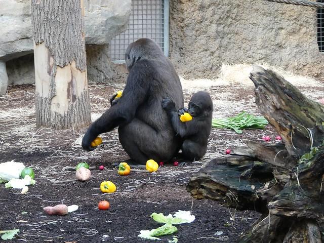 Shira und Wela, Zoo Frankurt