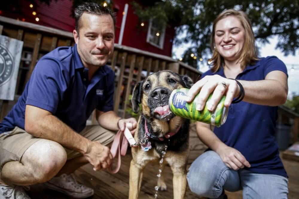 Еще одно пиво для собак