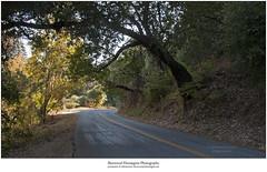 Alba Road