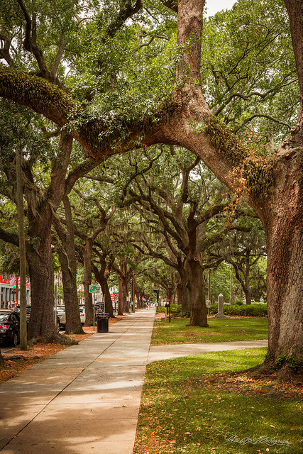 Spring in Savannah