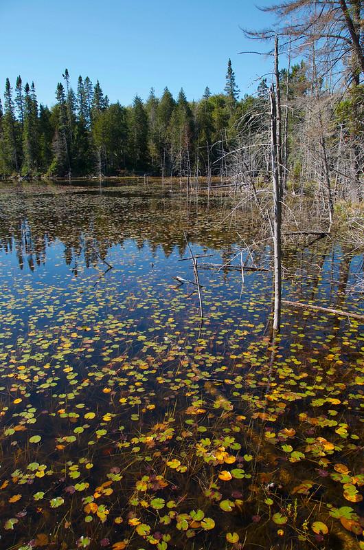 Lake Superior Park - Traper Trail