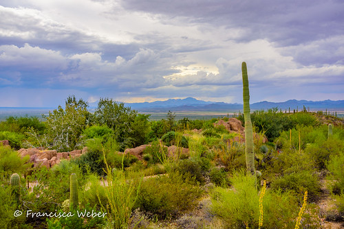 A view from the Tucson Desert Museum