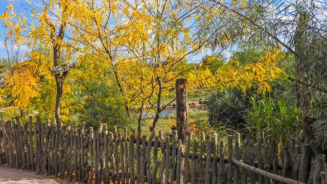 Fence Autumn - 5916