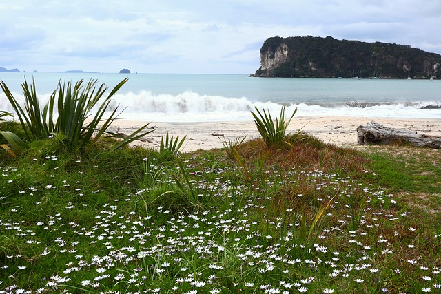 Spring Flowers by the beach, Whitianga - New Zealand