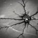 Neuronal 1 by Thirsty Hrothgar