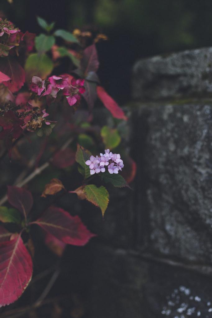 Kisiel-2018-10-06-076