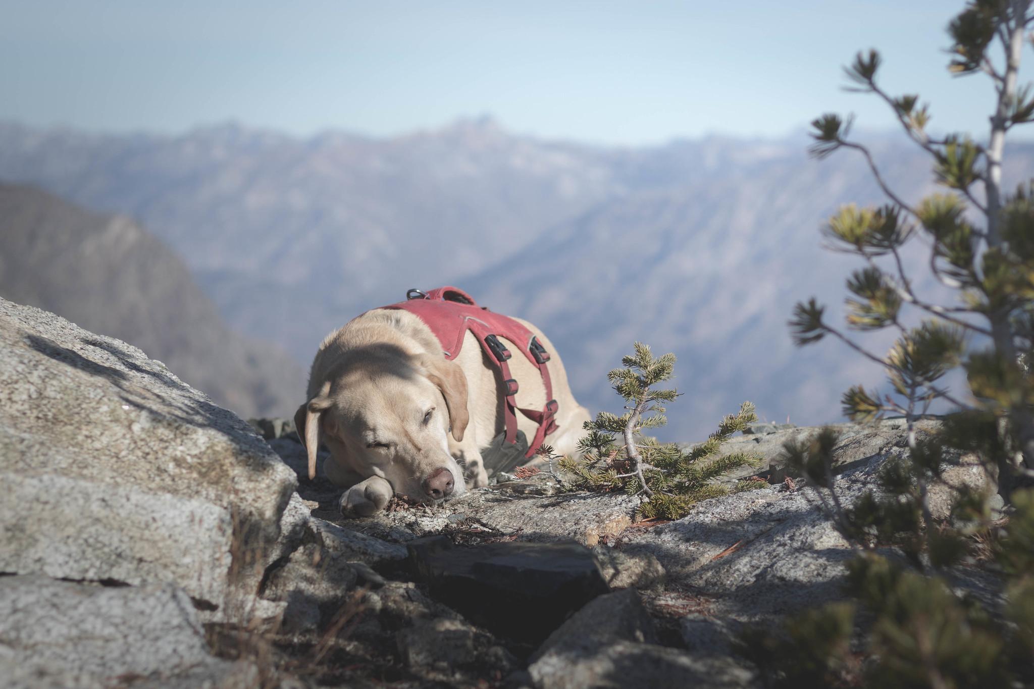 Summit dogs on Graham Mountain