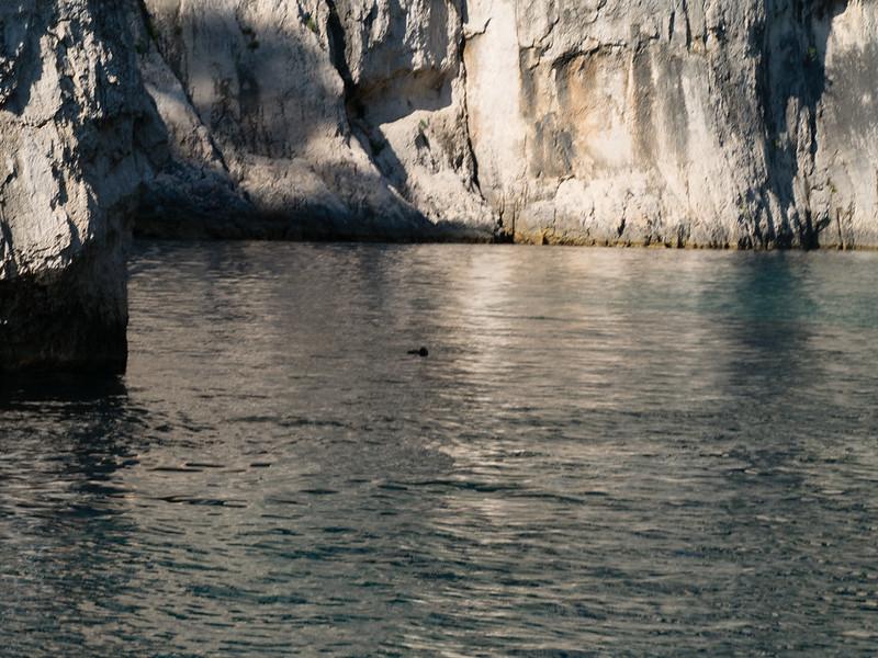 Cormorant fishing, En Vau calanque