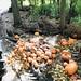 La Casa Afterschool Pumpkin Farm Field Trip