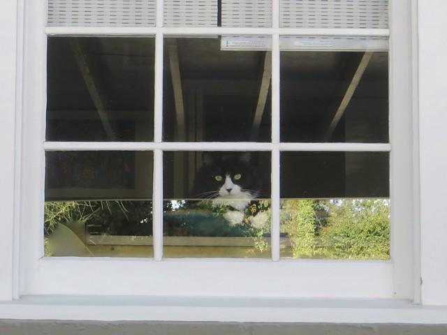 Kiwi waits