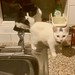 Magic & Dude helping me to wash up!