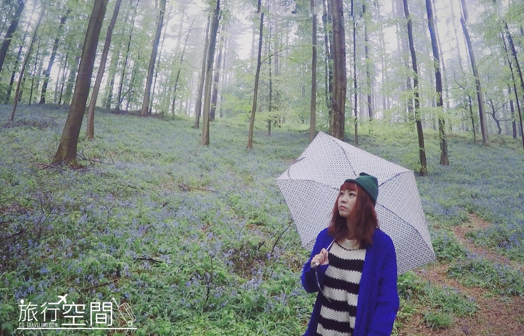 Hallerbos 紫色森林