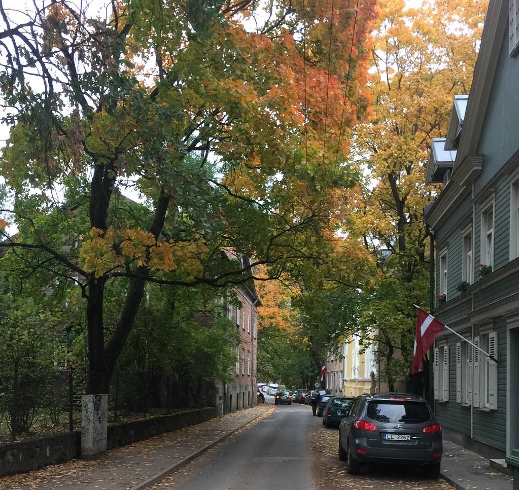 Lovely trees ! 17:25:00