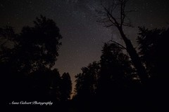 Night sky at the cottage in the woods