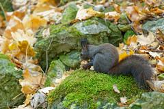 Squirrel #2 - My precious