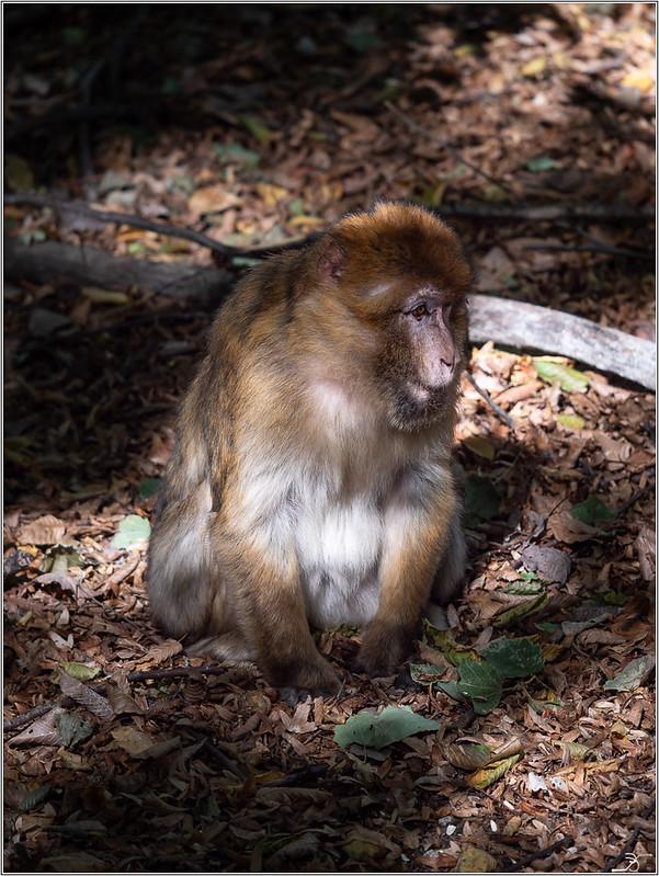 Terre des singes part3 45004276211_504a9f61f8_c