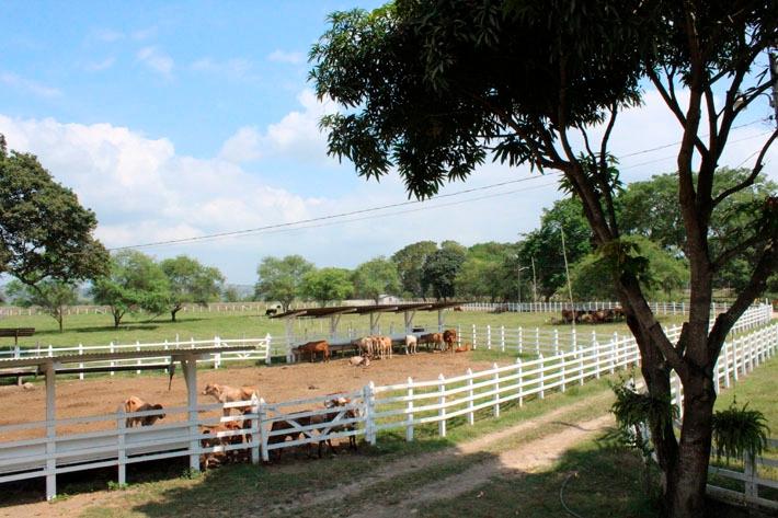 En el rancho, además de ganado vacuno y caballar, existen sembríos de cacao, plátano y frutales. Como parte del entretenimiento en el lugar, los visitantes pueden pasear a caballo.