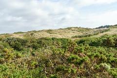 00772 Les dunes d'Hattainville